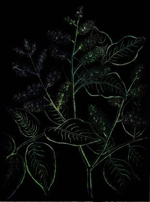 Flora Bagua