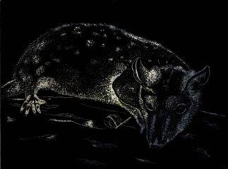 Fauna Bagua