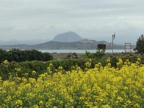 Jeju island seen from Gapado